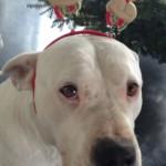 leinenlos hündin zu weihnachten 2