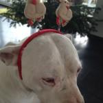leinenlos hündin zu weihnachten