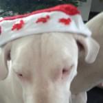 leinenlos rüde zu weihnachten 7
