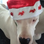 leinenlos rüde zu weihnachten 5