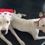 leinenlos hunde zu weihnachten 2