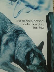 Suchhunde Training