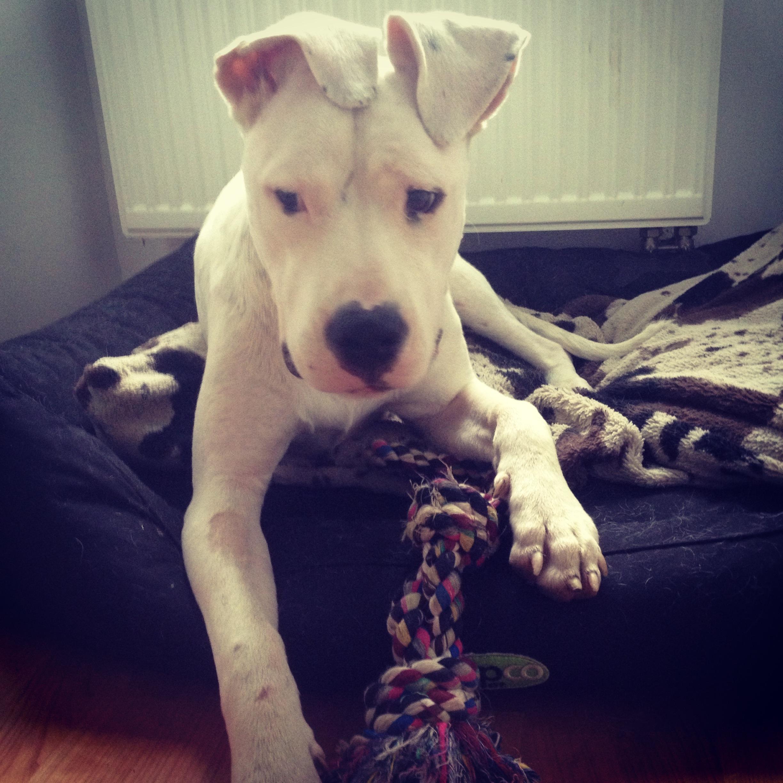 erziehung tauber hunde