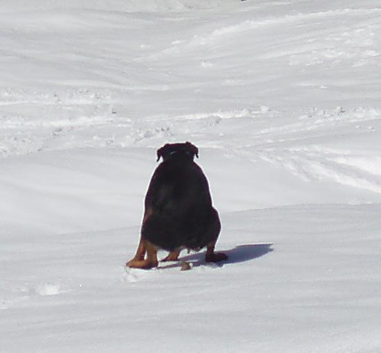 Hund Frisst Tapete An Was Tun : Igitt, mein Hund frisst Kacke – Leinenlos HundetrainingLeinenlos