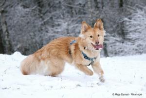 (leinenlos-hundetraining.com) Bild 2