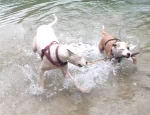 leinenlos_spielendehunde